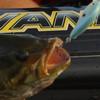 Toyota Tundra Bassmaster Angler of the Year