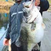 Mac Weakley's 25.1 lb. Bass
