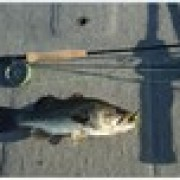 Fly Rod Bass Fishing