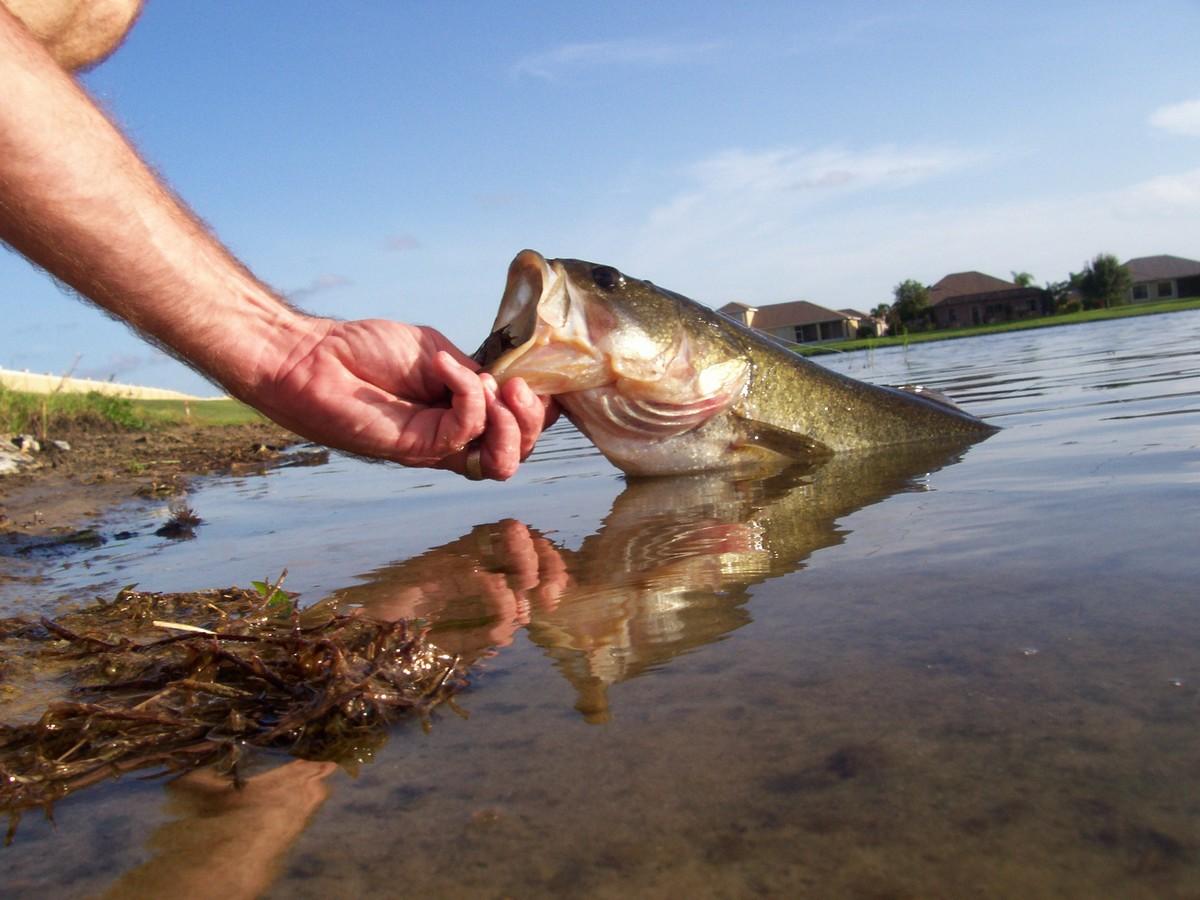 Successful new baits