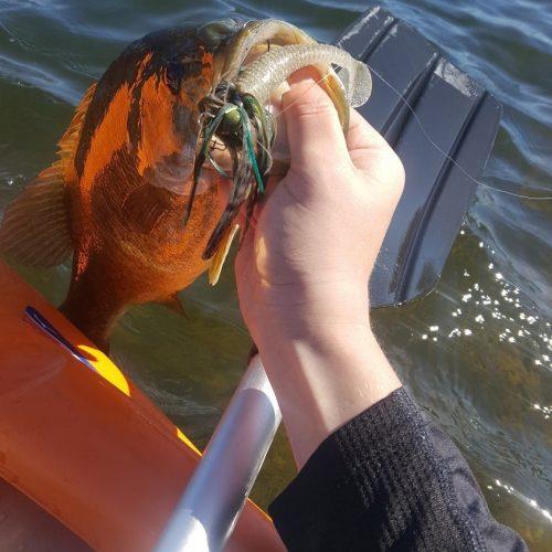 Vibrating Jig Fishing